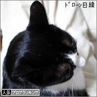 dai20171115_banner.jpg