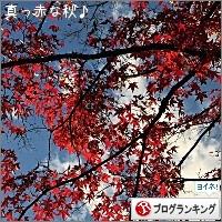 dai20171127_banner.jpg