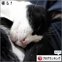dai20171227_banner.jpg