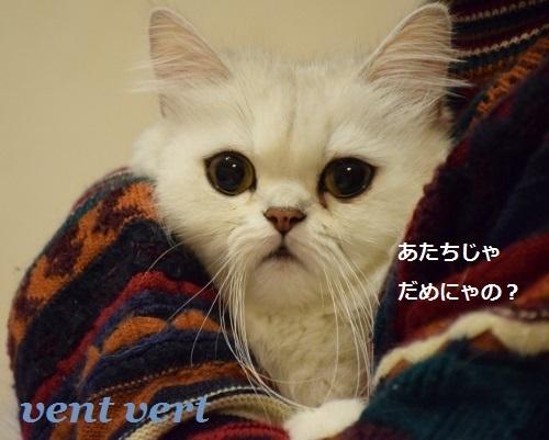 お料理10