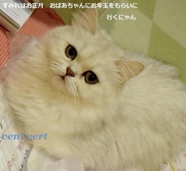 猫の眼は恐い10