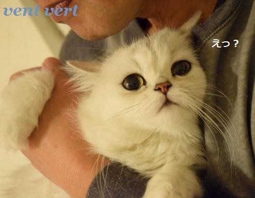 猫の眼は恐い6