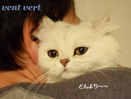 猫の眼は恐い9