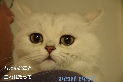 猫の眼は恐い7