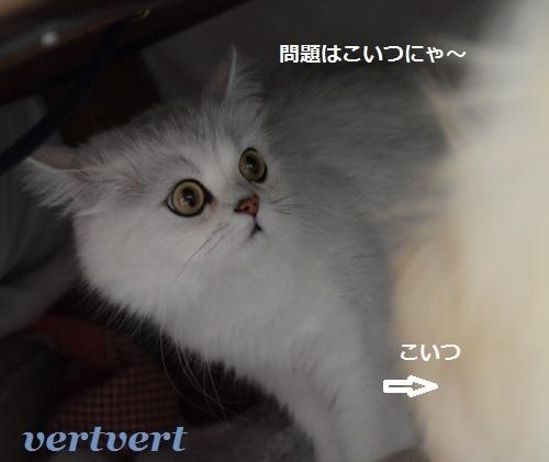 しゃんぷー9