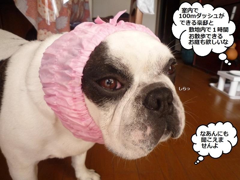 にこら201011to201108 159