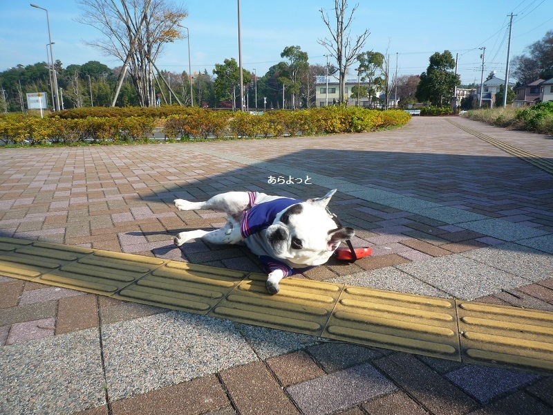 にこら201011to201108 477
