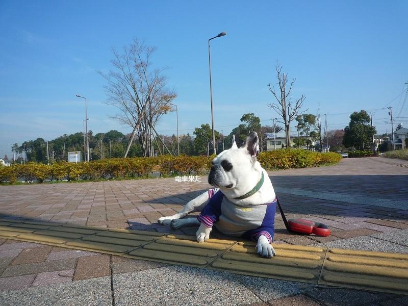 にこら201011to201108 478