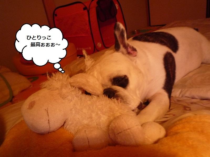 にこら201011to201108 510