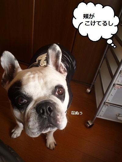 にこら201011to201108 1003