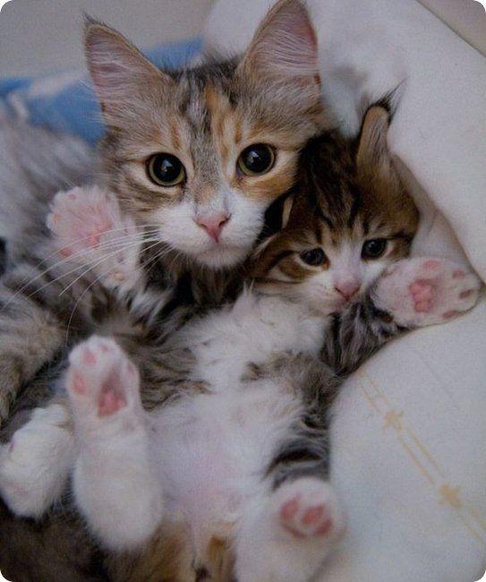 1128cat-hold-kitten-tight-r-default