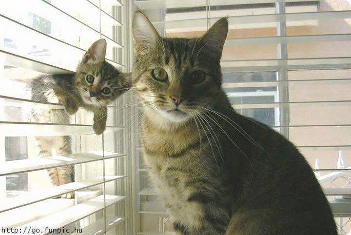 1128cat-and-kitten-in-horizontal-slat-blinds-r-default