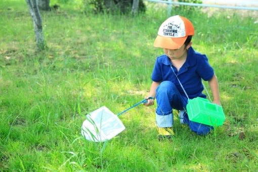 子供が虫と遊ぶ,昆虫採集