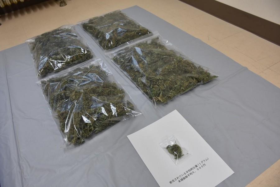 【大麻】北海道の野生大麻を使用目的で不正に刈り取る事件2-1