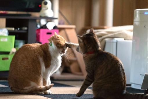 野良猫,ネコパンチ,ネコの縄張り