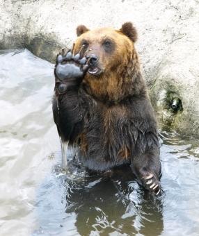 野生の熊,クマと遭遇,登山