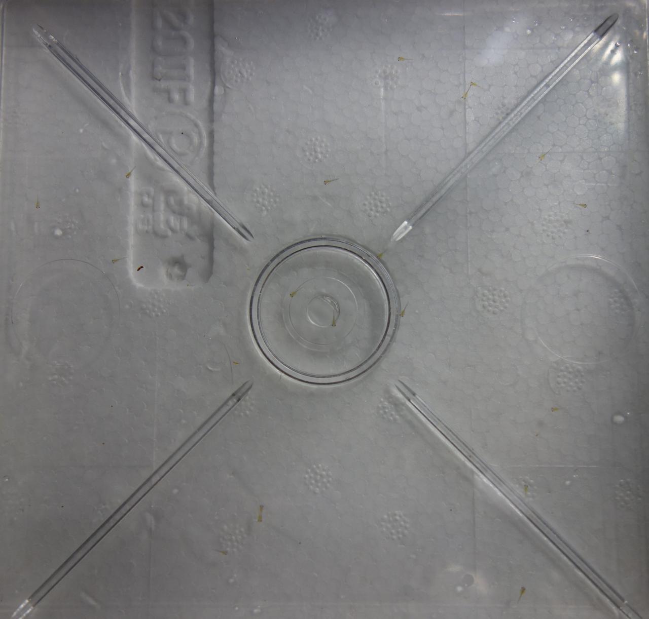 DSC00763.jpg