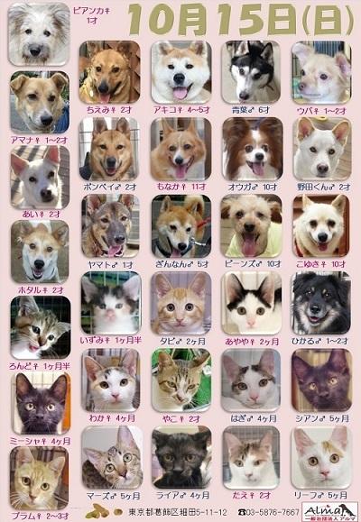 ALMA ティアハイム 10月15日 参加犬猫一覧