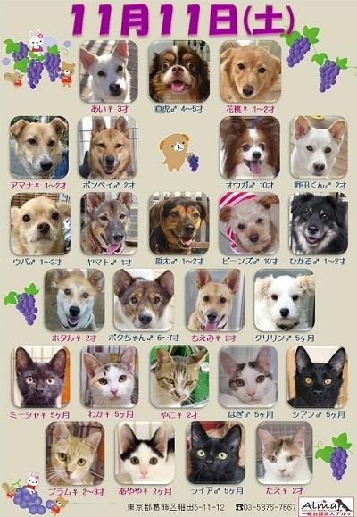 ALMA ティアハイム 2017年11月11日 参加犬猫一覧