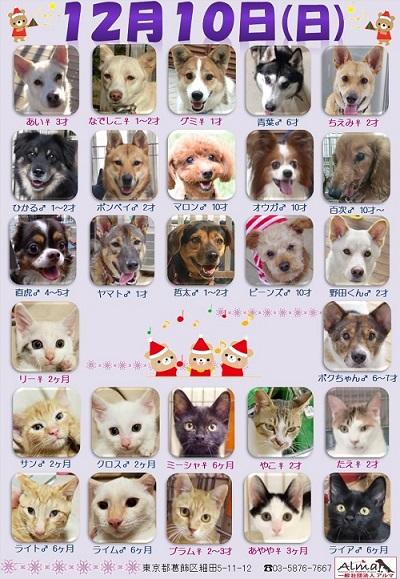 ALMA ティアハイム 2017年12月10日 参加犬猫一覧