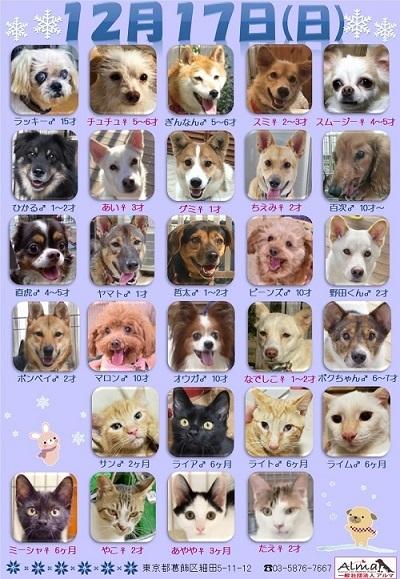 ALMA ティアハイム 2017年12月17日 参加犬猫一覧