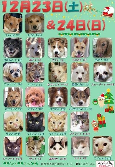 ALMA ティアハイム 2017年12月2324日 参加犬猫一覧