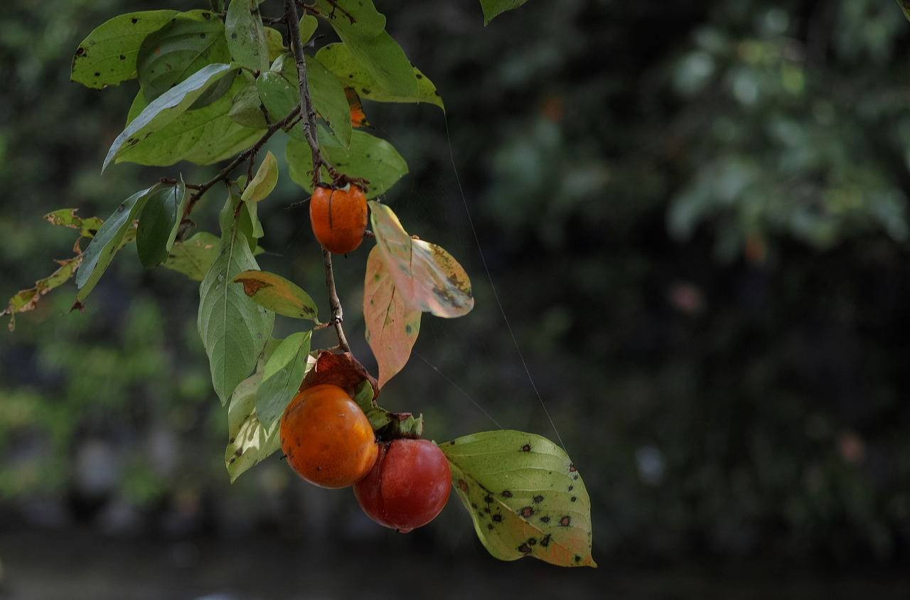 二の瀬の秋02