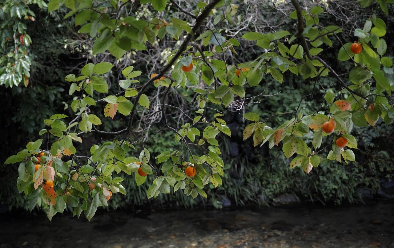 二の瀬の秋03