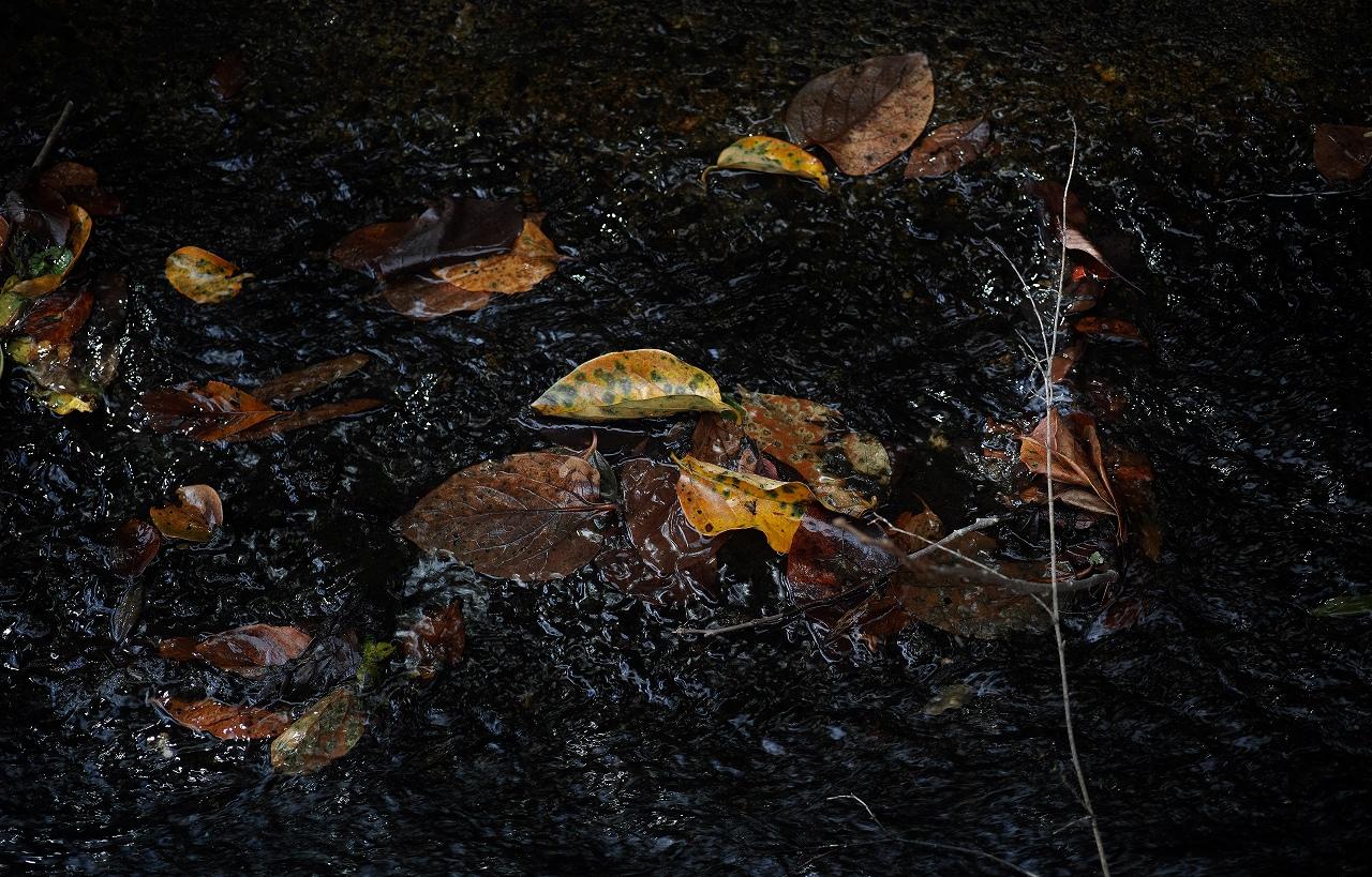 二の瀬の秋10