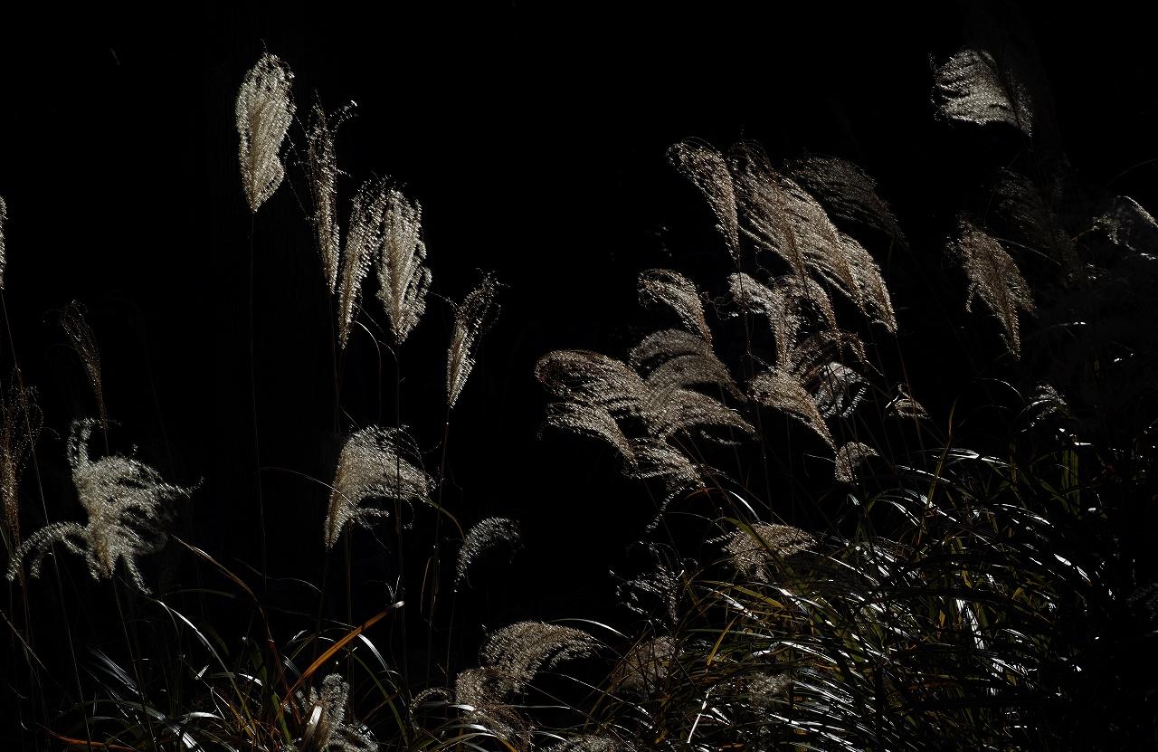 A06光り、踊る枯れ尾花