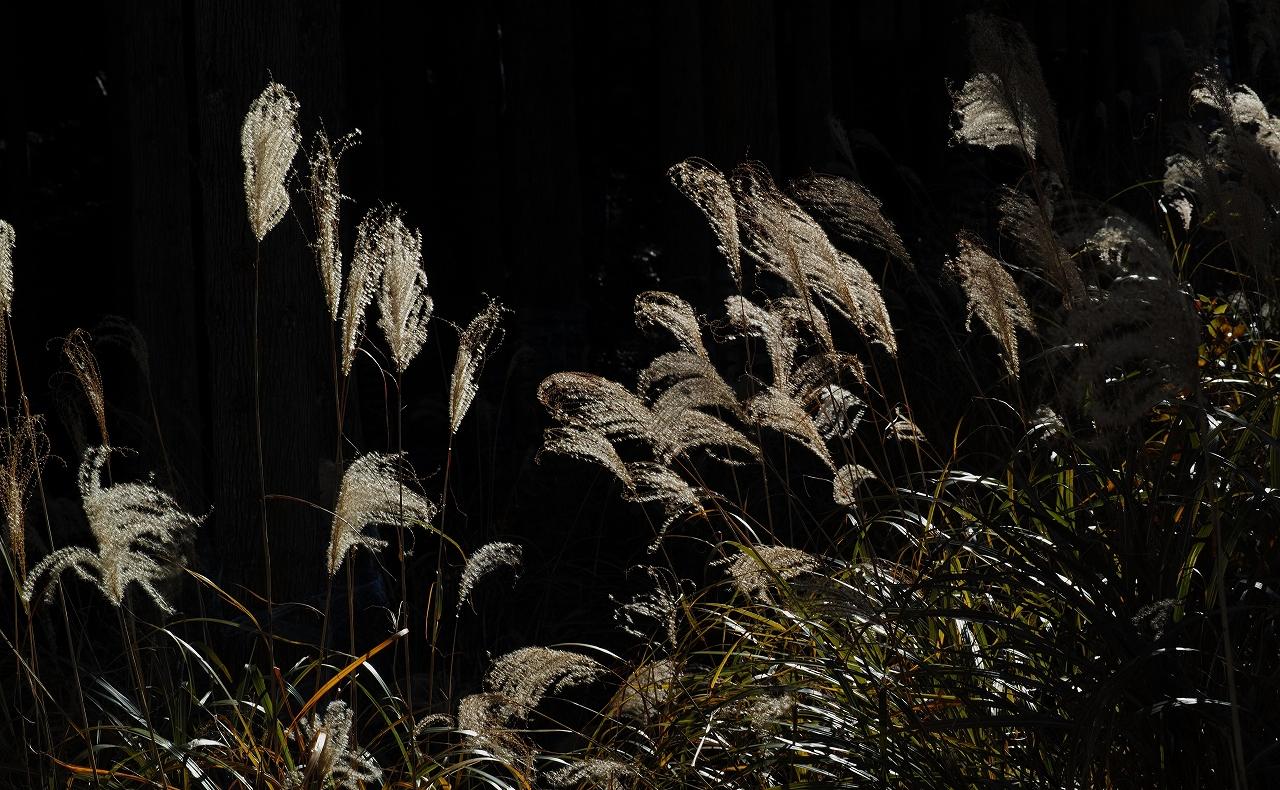 A15光り、踊る枯れ尾花