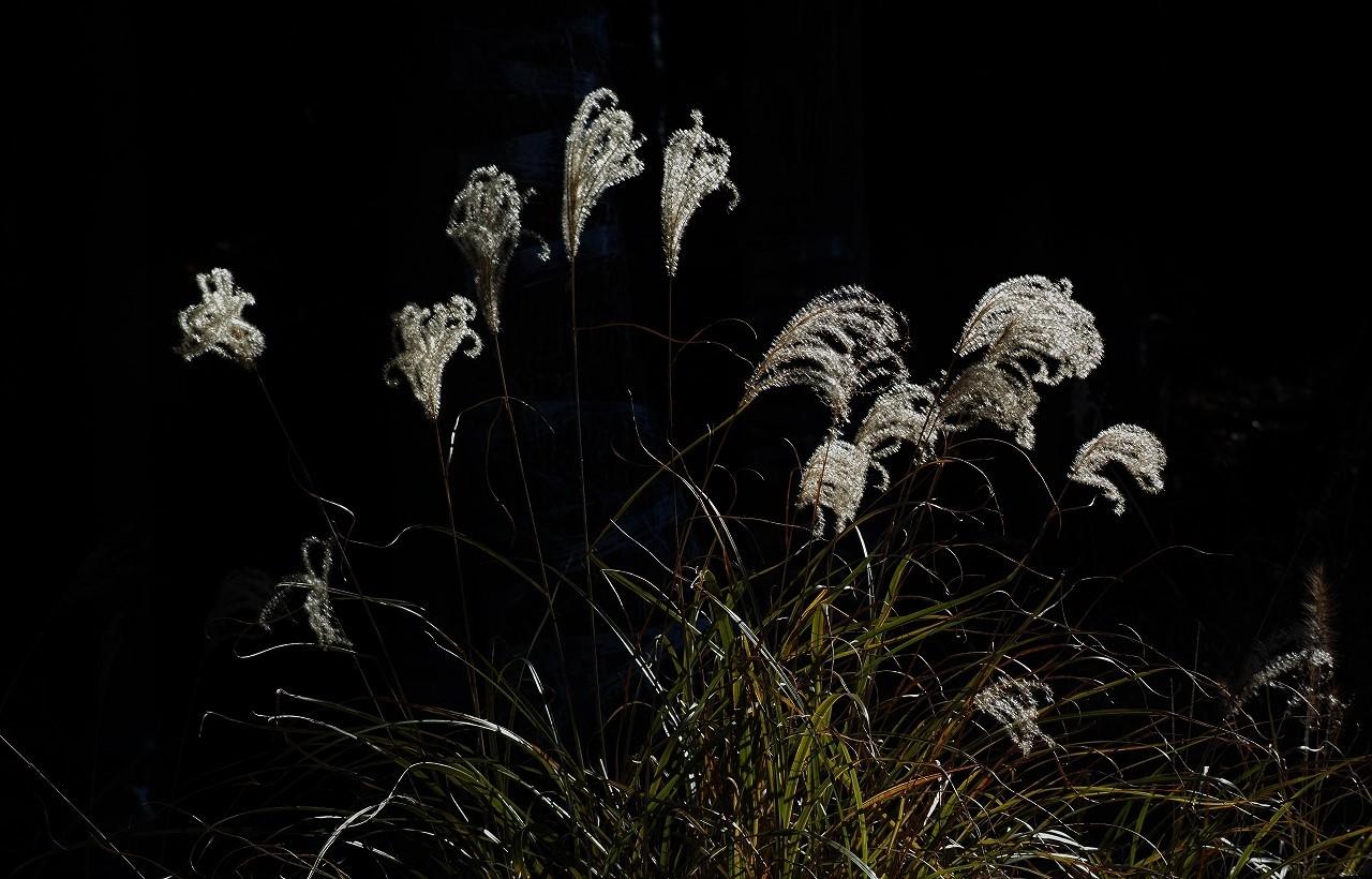 A09光り、踊る枯れ尾花