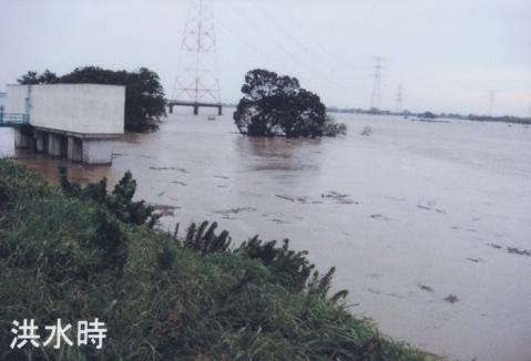荒川の洪水・鴻巣市糠田樋管付近