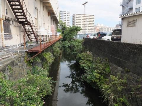 城内橋より観音川上流を望む