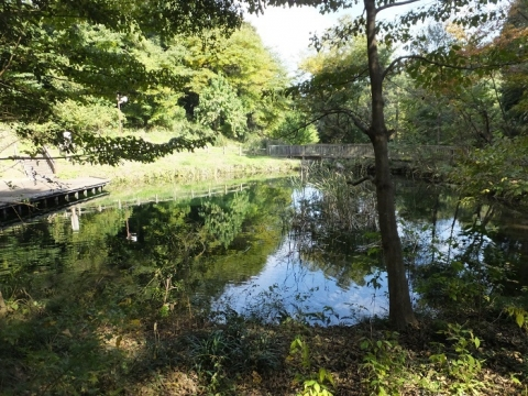 忠生公園・源流の池