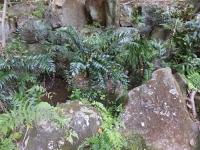 忠生公園の泉