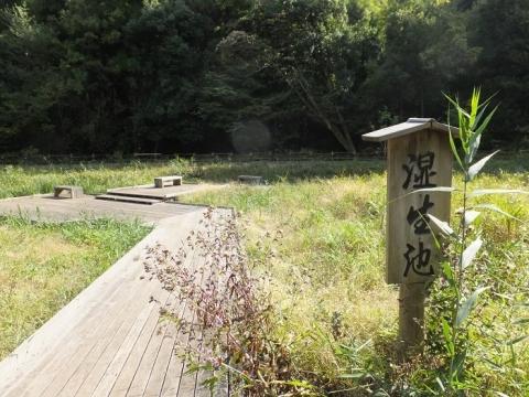 忠生公園・湿生池