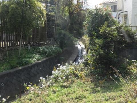 町田市・山崎川