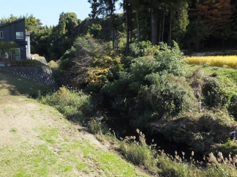 鶴見川旧河道・丸山橋下流