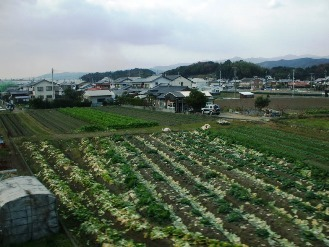 tosayamada2.jpg
