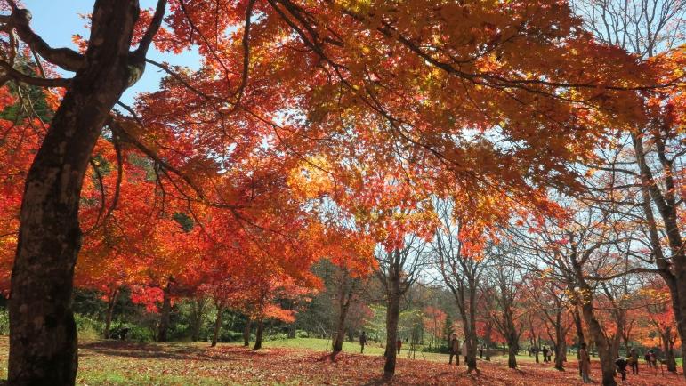福原山荘 紅葉