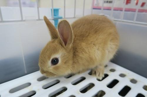 ミニウサギ1030 (1)