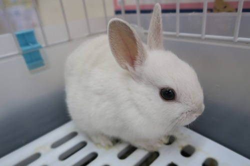 ミニウサギ1030 (2)