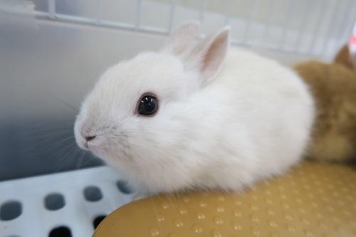 ミニウサギ1127 (2)