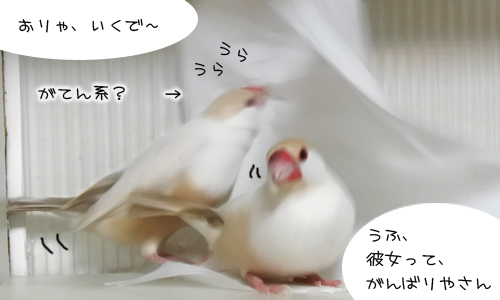 毎日のご飯の食べ方も鳥それぞれ_4