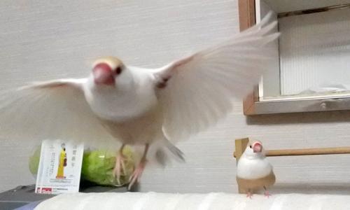 飛んでる写真、再び_2