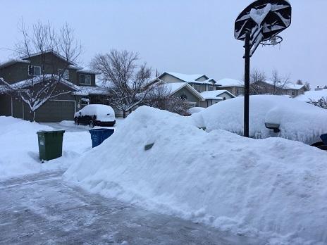 雪掻きの成果