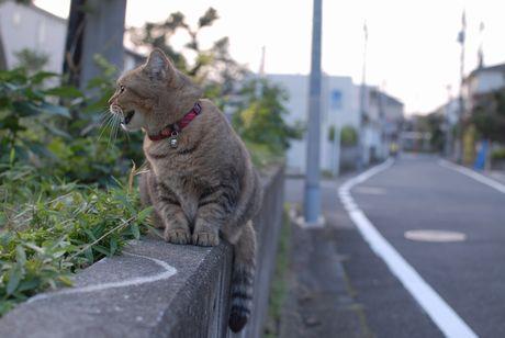 ★猫ライオン