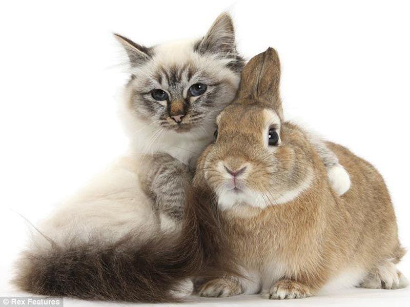 フリー写真 仲良しな猫とうさぎ