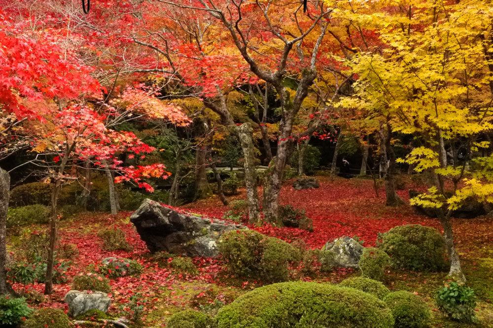 フリー写真 紅葉3